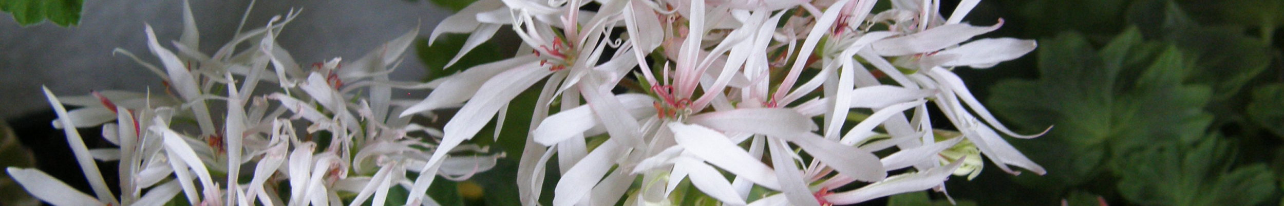 Белый цветок.Уфа